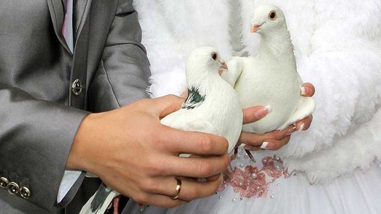 Golubovi na svadbama